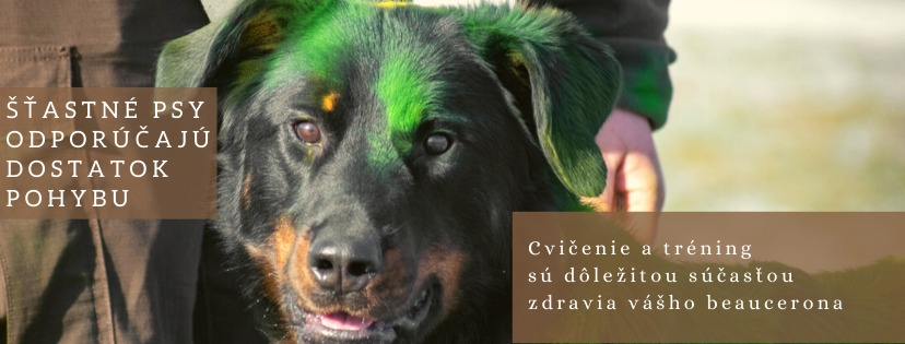 White Text On Photo Fact Trivia About Dog Facebook Cover-9