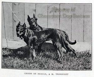 909-3 BEAUCERONS OF 1905 Le sport universel illustr 02-07-1905 - L'exposition canine de Rouen