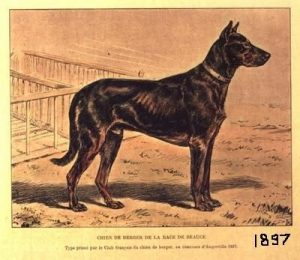 beauceron_1897